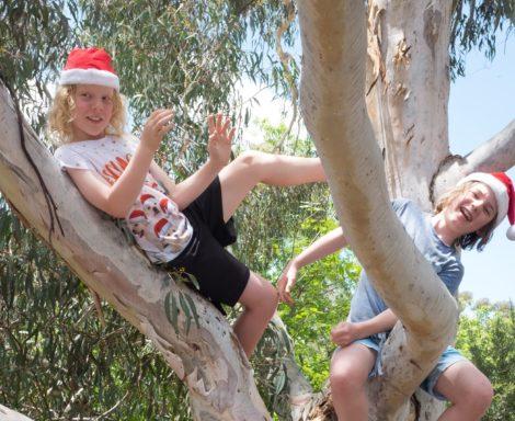 Christmas up a gum tree